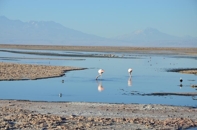 Chile // Das längste Land der Welt